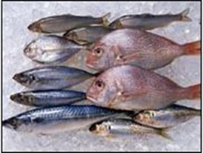Felce karşı ayda bir balık